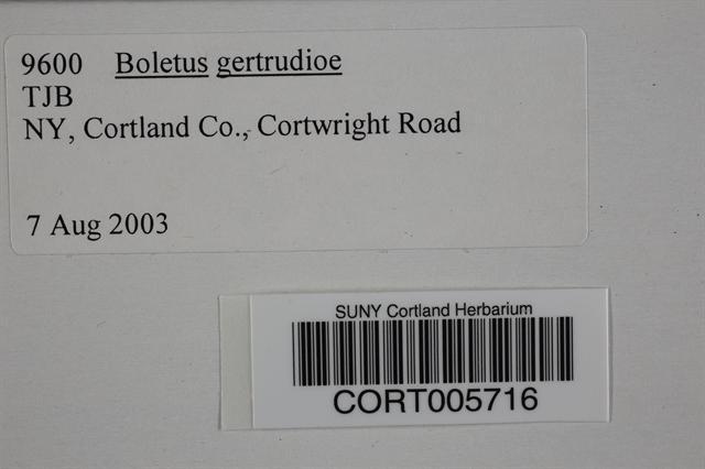Boletus gertrudiae image