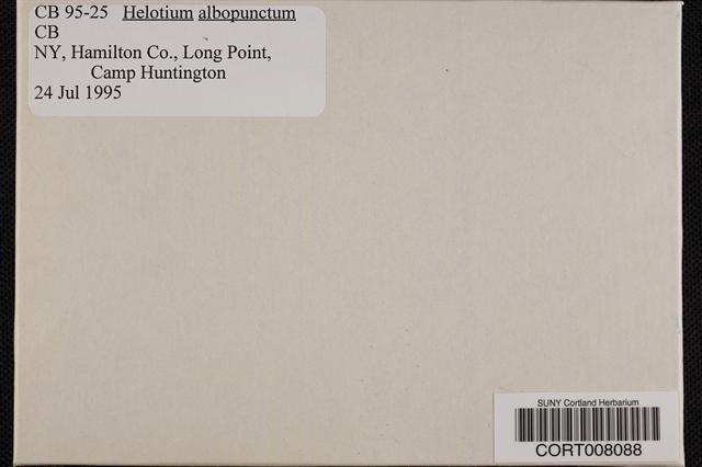 Image of Helotium albopunctum