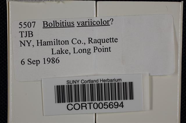 Bolbitius variicolor image