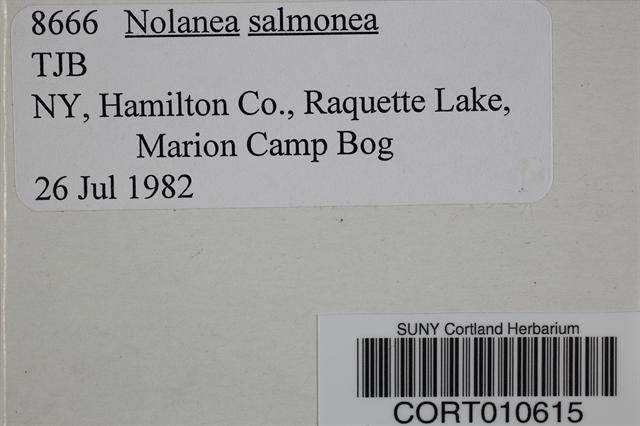 Nolanea salmonea image