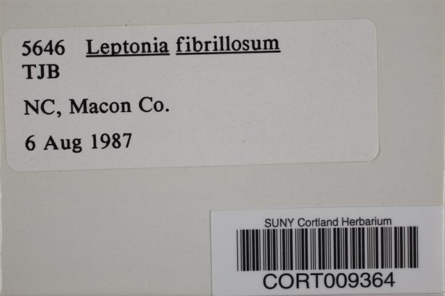 Image of Leptonia fibrillosa
