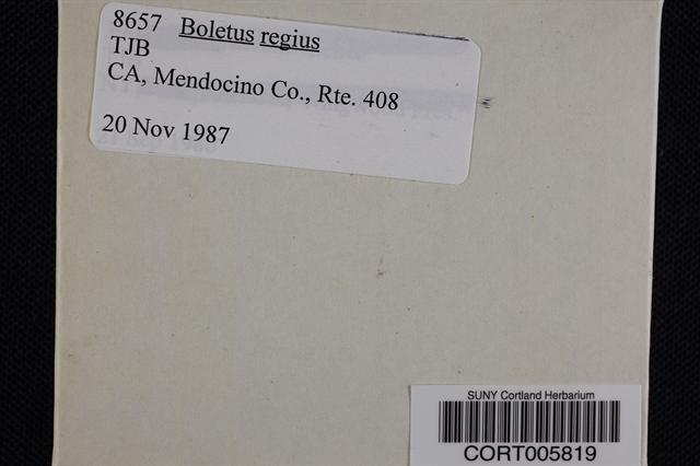 Boletus regius image
