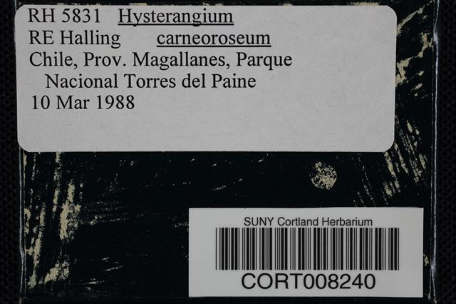 Image of Hysterangium carneoroseum
