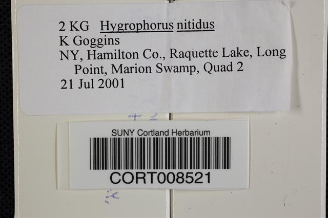 Hygrocybe nitida image