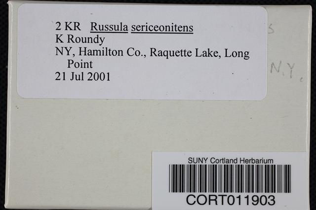 Russula sericeonitens image