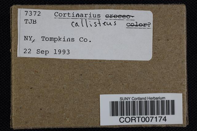 Cortinarius callisteus image