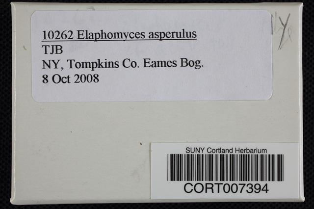 Elaphomyces asperulus image