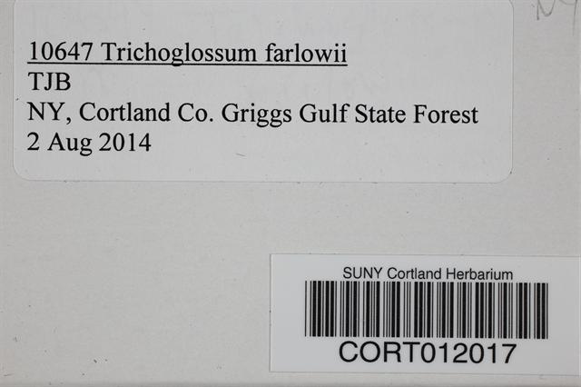 Image of Trichoglossum farlowii