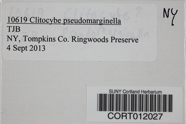 Image of Clitocybe pseudomarginella