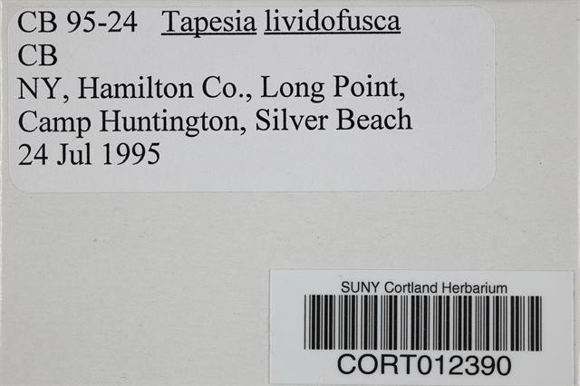Tapesia image